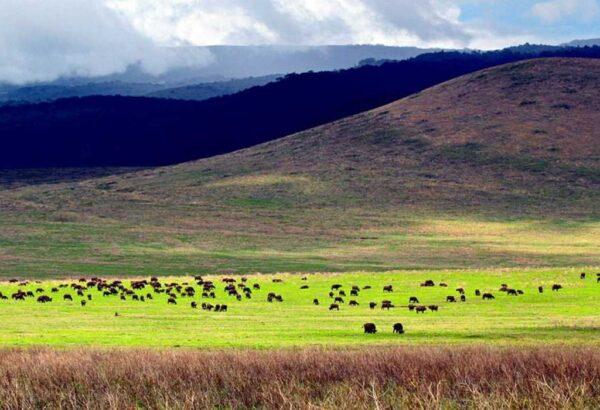 Ngoronogro_v-1024×700