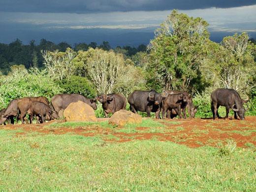 Kenya-Aberdare-Ranges-Bu-025